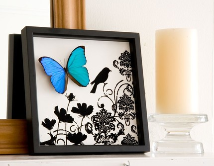 Bugs Under Glass Silhouette Butterfly