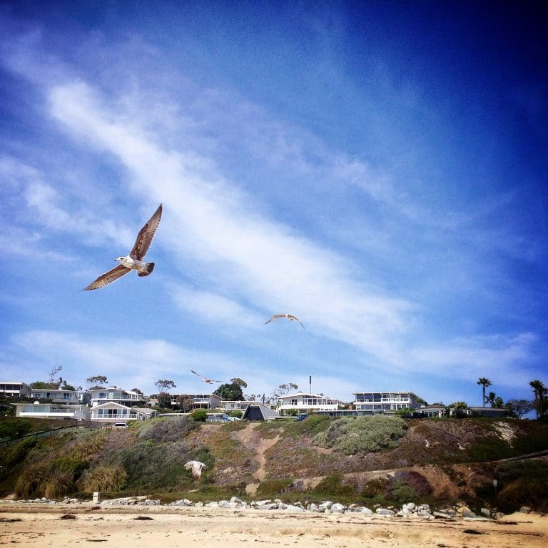 monarch-beach-seagull-flying-overhead