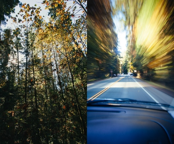 Driving_forest