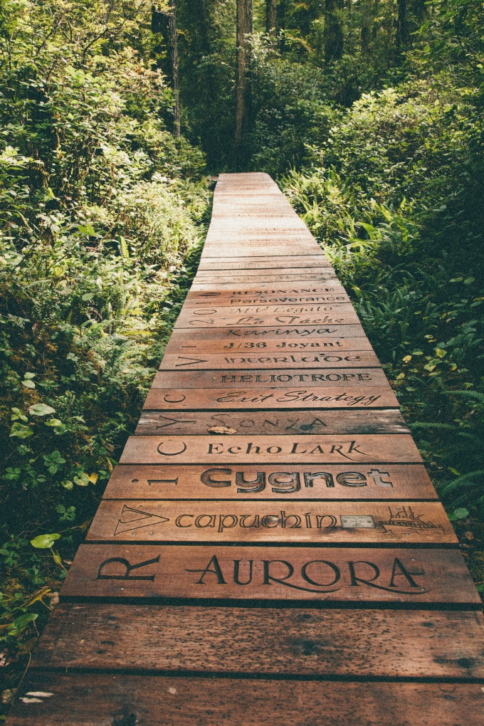 boardwalk_rainforest_trail_typography_fonts