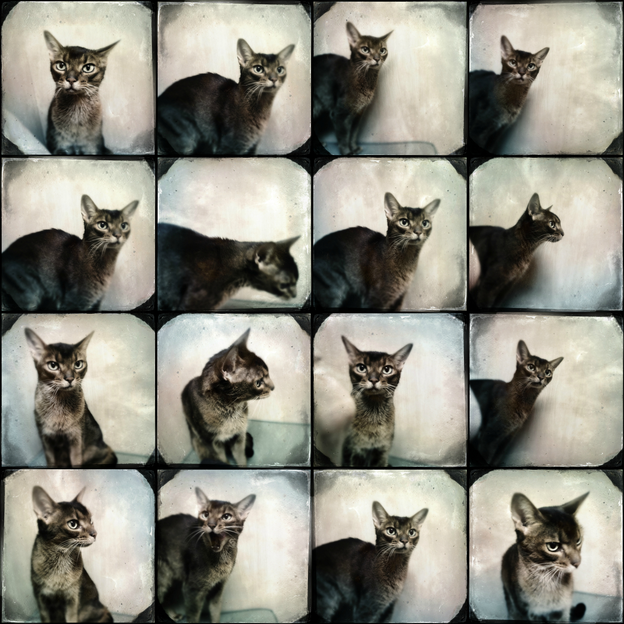 Hipstamatic_Tinto_Cat_Collage